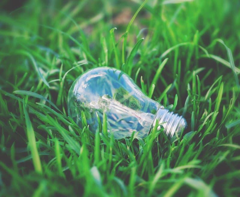 在草的电灯泡 免版税库存照片