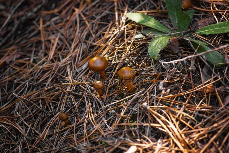 在草的秋天蘑菇在一好日子 户外蘑菇 背景蓝色云彩调遣草绿色本质天空空白小束 免版税库存照片