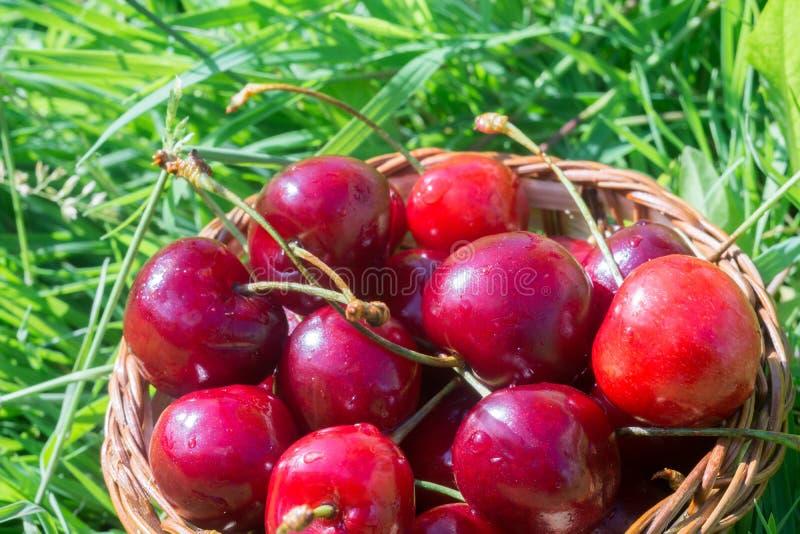 在草的红色樱桃 库存图片