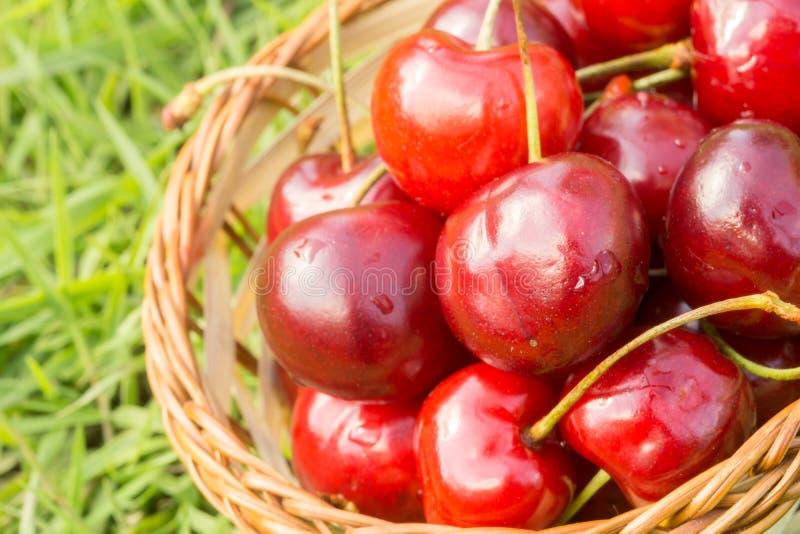 在草的红色樱桃 库存照片