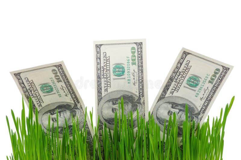 在草的美金 免版税图库摄影