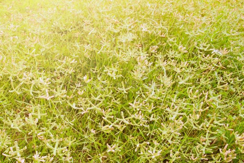 在草的草花归档了 免版税库存图片