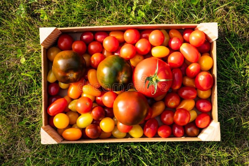 在草的蕃茄箱子 免版税库存图片
