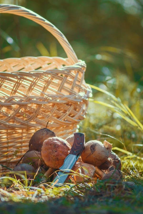 在草的蘑菇在户外空的篮子前面 库存照片