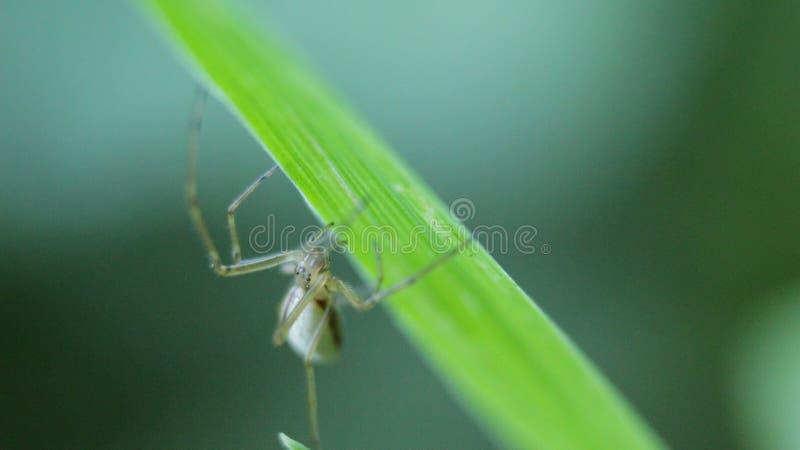 在草的蜘蛛 免版税库存照片