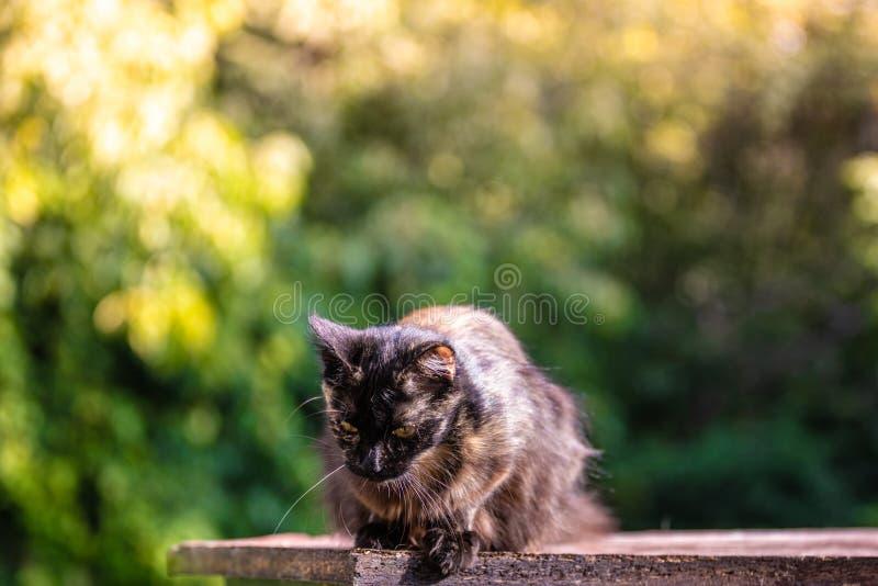 在草的被剥离的蓬松猫在被弄脏的背景 图库摄影