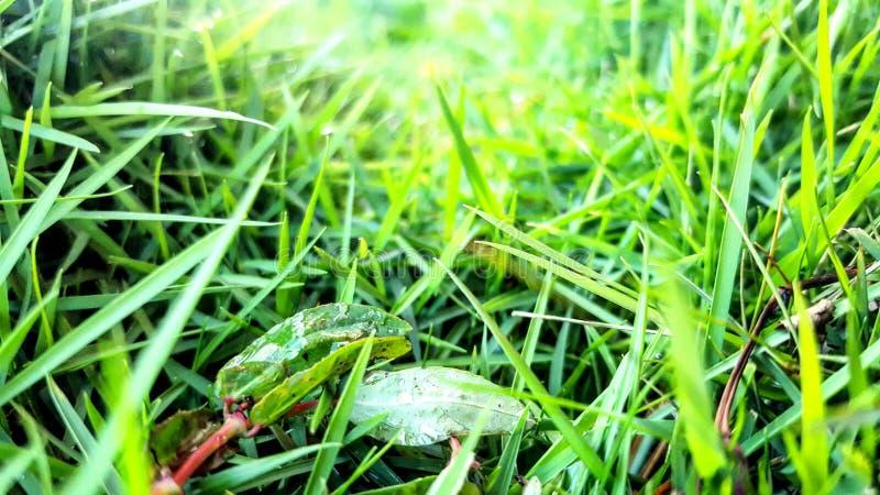 在草的重点 库存照片