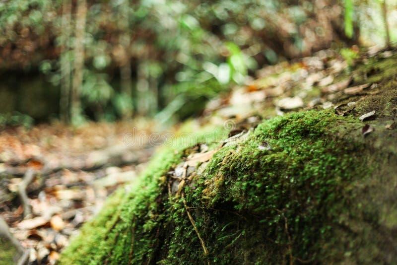 在草的露水由自然出生 库存照片