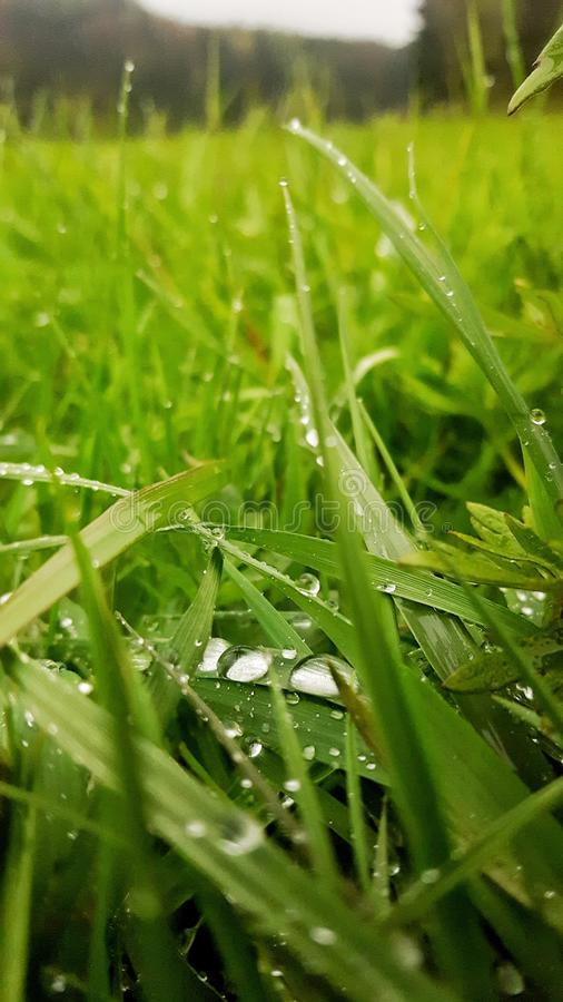 在草的露滴 库存照片
