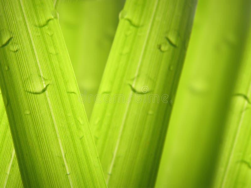 在草背景的露滴 免版税库存照片
