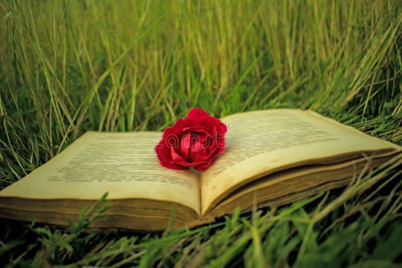 在草,一朵玫瑰的一本旧书作为书的标志 适用于书套,例证,介绍,邀请 库存照片