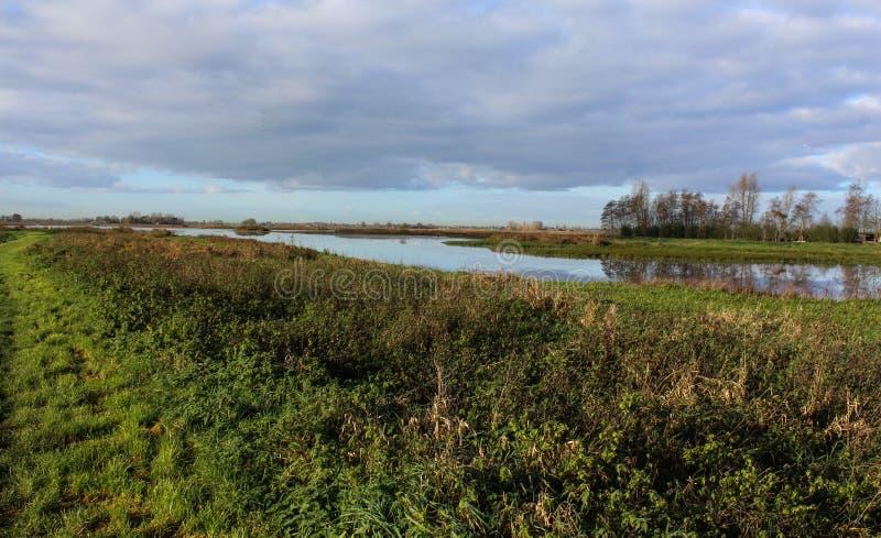 在荷兰使风景Groene Jonker在秋天, Nieuwkoopse Plassen陷入沼泽 免版税库存照片