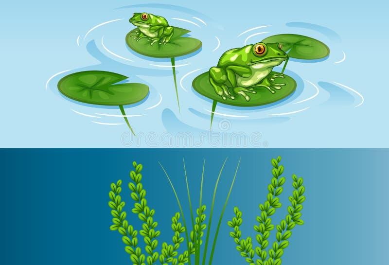 在荷花和水下的场面的青蛙 皇族释放例证