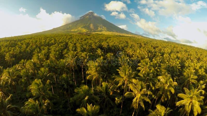在莱加斯皮市附近的马荣火山在菲律宾 在棕榈密林和种植园的鸟瞰图日落的 Mayon火山 免版税库存图片