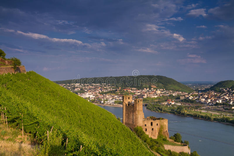 在莱茵河谷上的城堡Ehrenfels 图库摄影