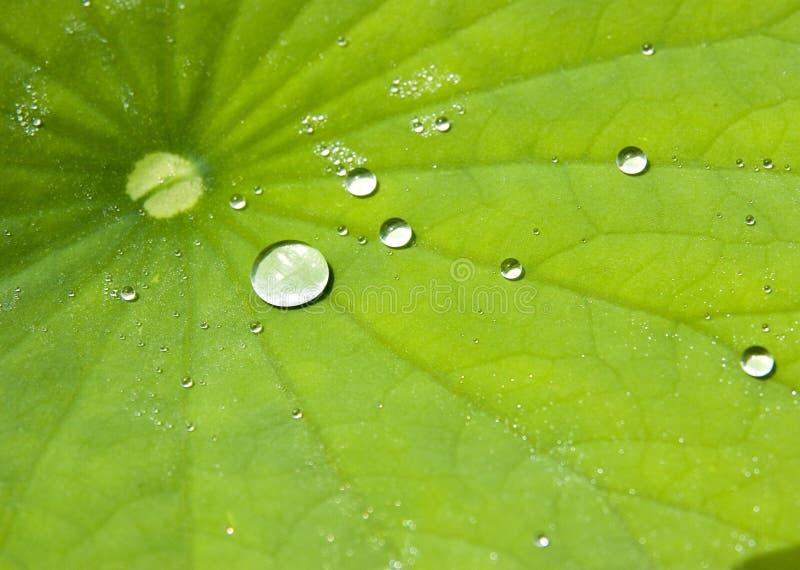 在莲花叶子的水下落 免版税库存照片