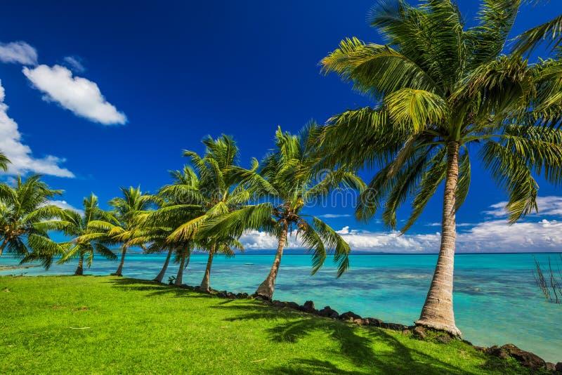 在萨摩亚海岛的北边的热带海滩有棕榈树的 免版税库存图片