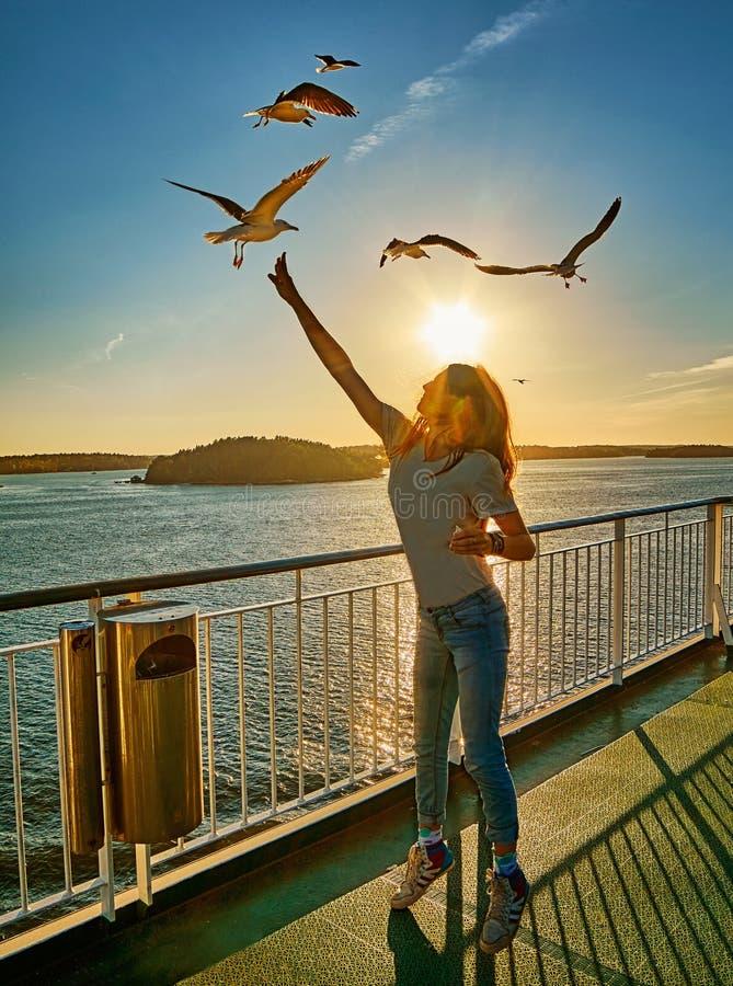 在落日火光的女孩哺养的海鸥一条轮渡的在斯堪的那维亚 库存照片