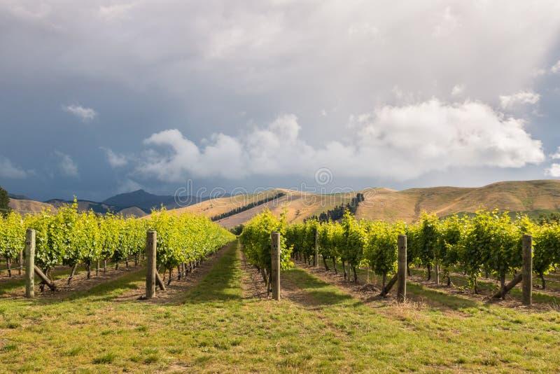 在葡萄园上的剧烈的风雨如磐的天空在马尔伯勒,新西兰 免版税图库摄影