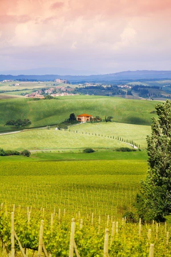 在葡萄园在托斯卡纳风景,意大利附近安置 库存图片