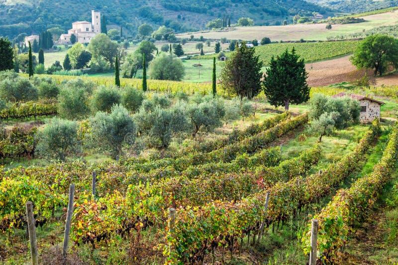 在葡萄园的美丽的景色在托斯卡纳 免版税库存图片