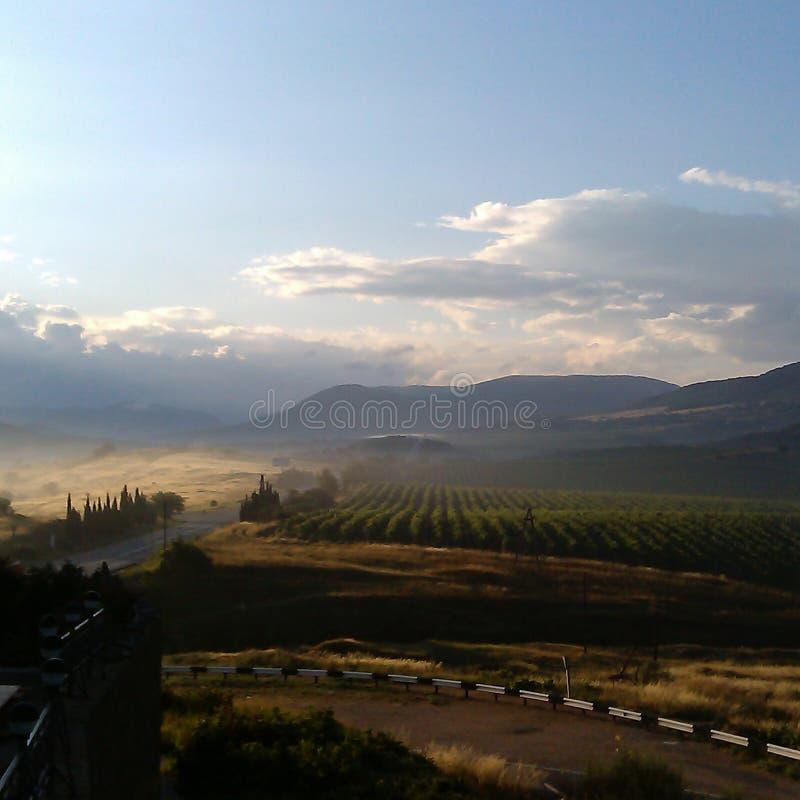 在葡萄园附近的有薄雾的早晨 库存照片