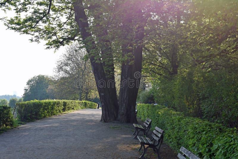 在葡萄园Lohrberg,法兰克福/主要,德国的树 免版税库存照片