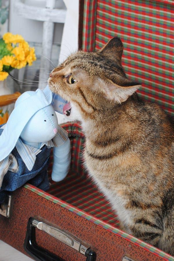 在葡萄酒手提箱攻击的玩具野兔的镶边猫 库存图片