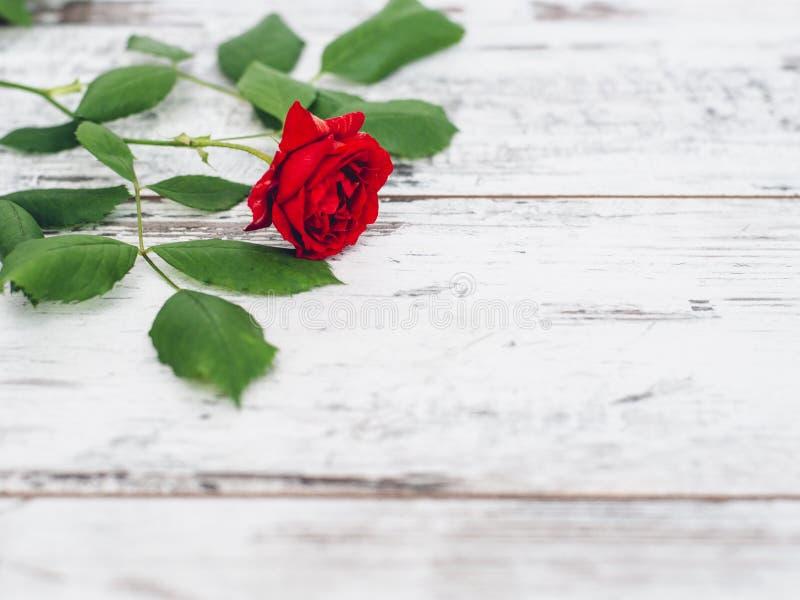 在葡萄酒木桌上的唯一红色玫瑰 免版税库存图片