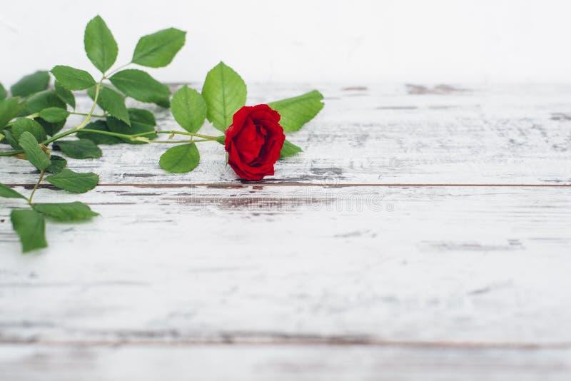 在葡萄酒木桌上的唯一红色玫瑰 免版税库存照片