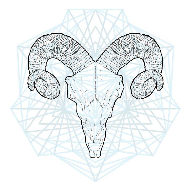 公羊, 哺乳动物.