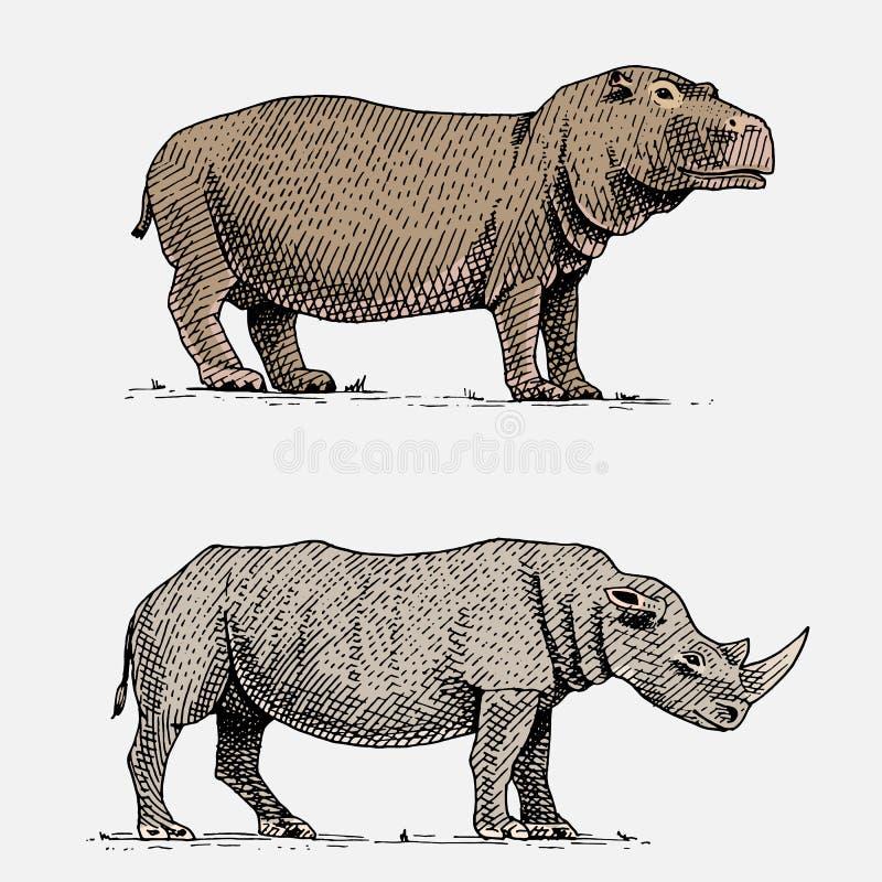 在葡萄酒的河马和黑或白犀牛手拉,被刻记的野生动物或减速火箭的样式,非洲动物学 向量例证