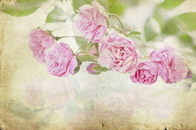 在葡萄酒纸背景的桃红色玫瑰 免版税库存照片