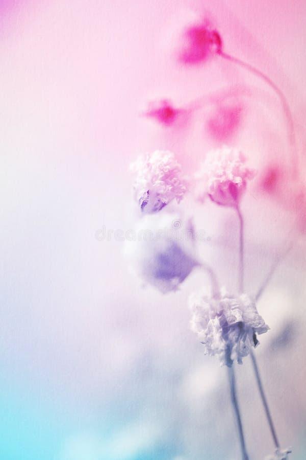 在葡萄酒颜色样式的五颜六色的花在桑树纸纹理 库存图片