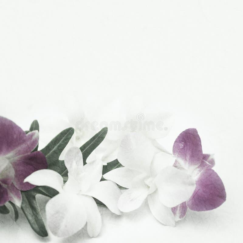 在葡萄酒颜色样式的兰花在桑树纸纹理 免版税库存照片