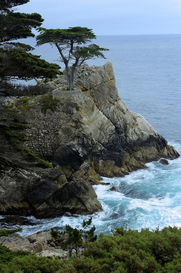 在蒙特里海湾的孤立柏树沿17英里驱动 免版税库存照片