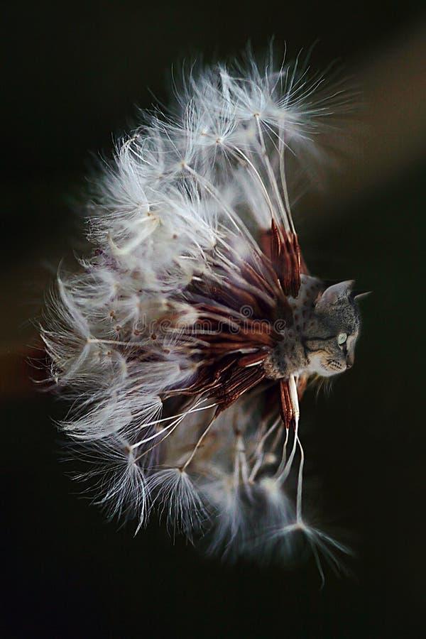 在蒲公英的猫头 免版税图库摄影