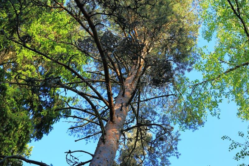 在蓝天的出色的意见通过绿色树加冠,五颜六色的自然背景 库存图片