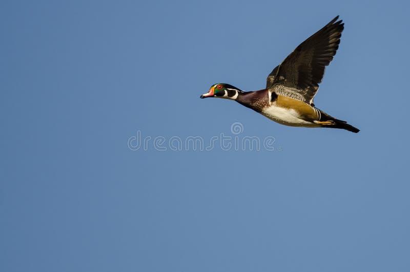在蓝天的孤立林鸳鸯飞行 库存照片