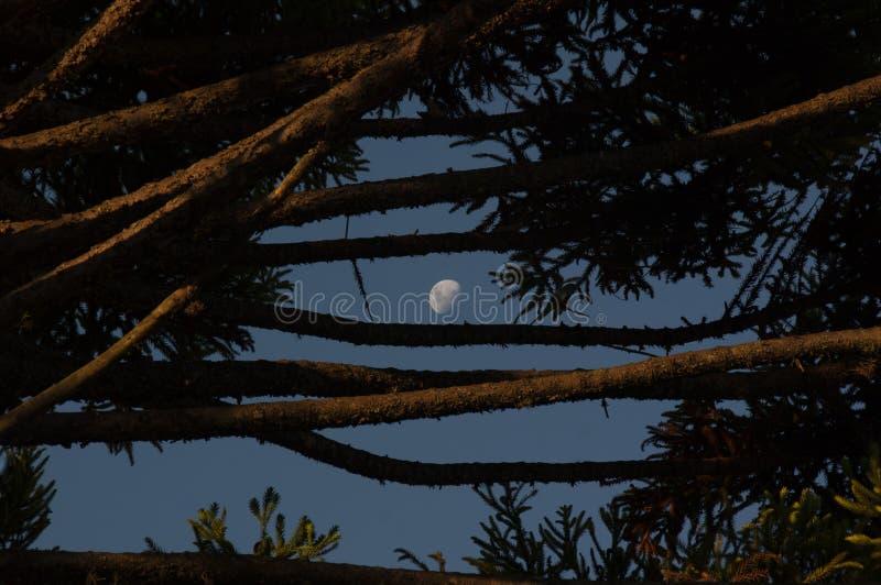 在蓝天的月亮 图库摄影