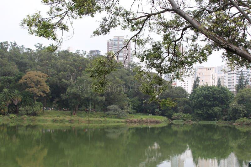 在蓝天的树在Aclimação公园- São保罗Brazilazil 免版税库存图片