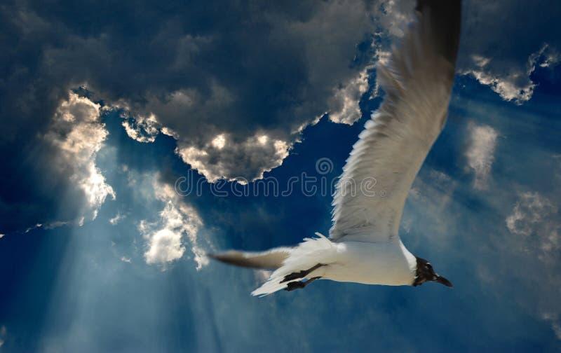 在蓝天的海鸥 免版税库存图片