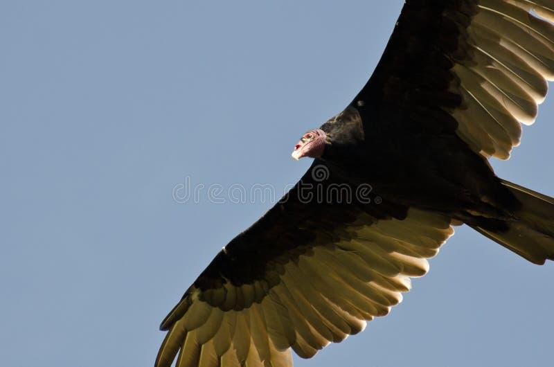 在蓝天的火鸡兀鹰飞行 图库摄影