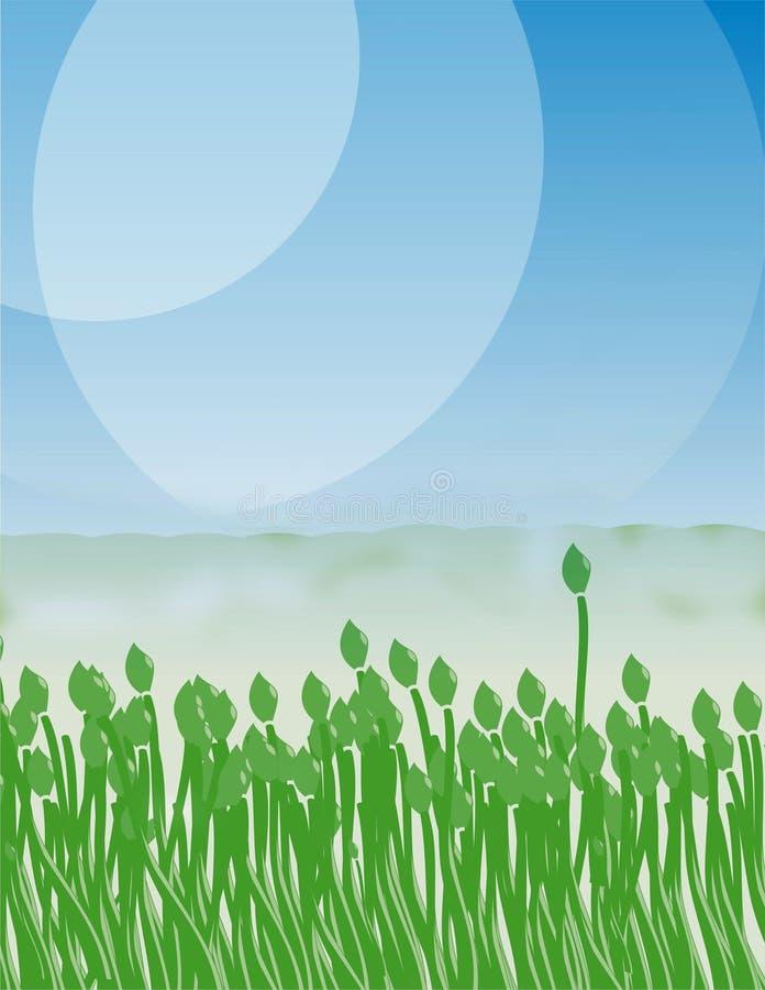 在蓝天的绿色郁金香 库存图片