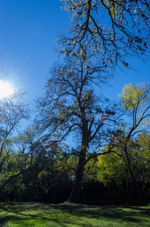 在蓝天的美丽的树 免版税图库摄影