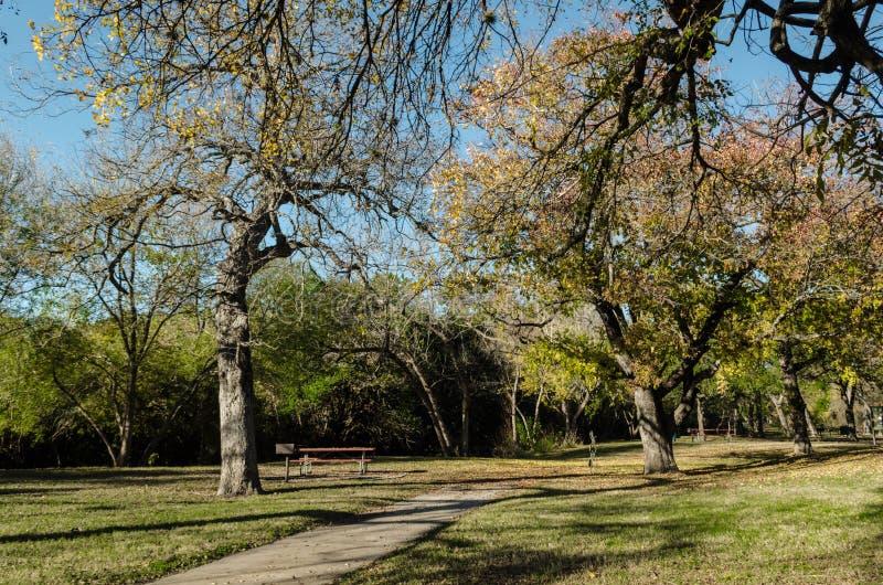 在蓝天的美丽的树 免版税库存照片