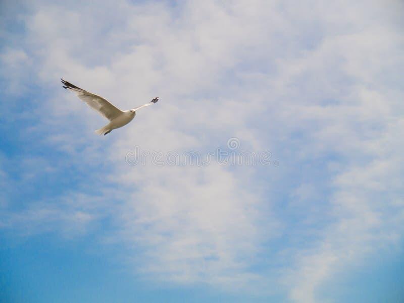 在蓝天的鸟飞行 库存图片