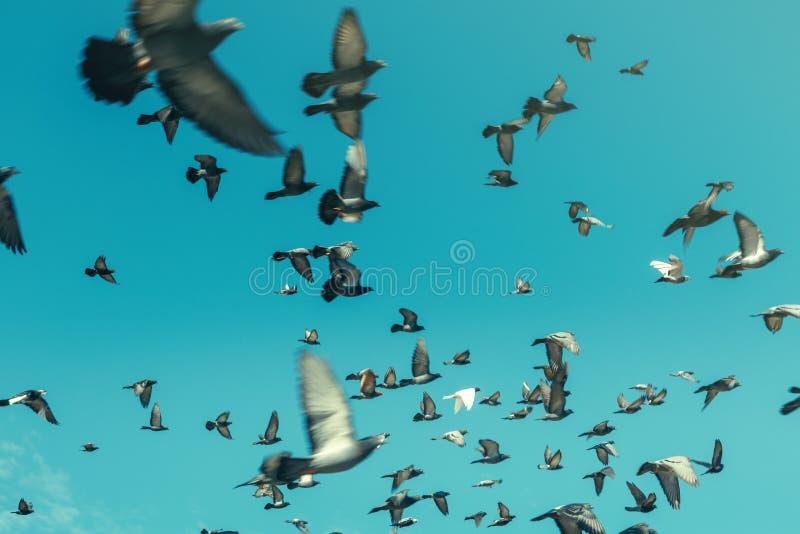 在蓝天的鸽子 自由目的地旅行概念 图库摄影