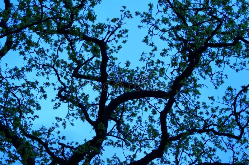 在蓝天的结构树 免版税库存照片
