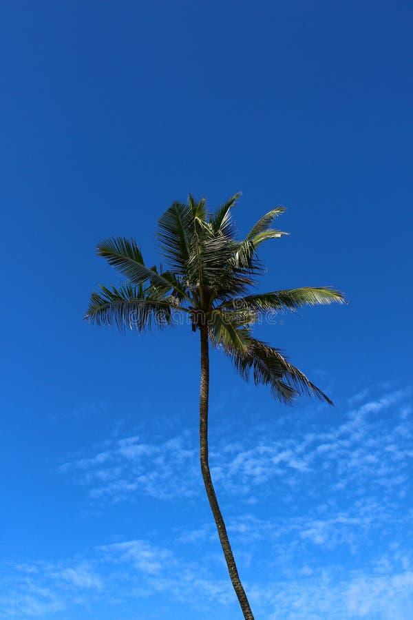 在蓝天背景的棕榈树  库存照片